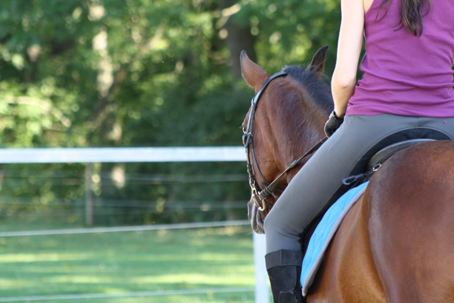 Traber reiten – Schwierigkeiten bei der Umstellung zum Reitpferd