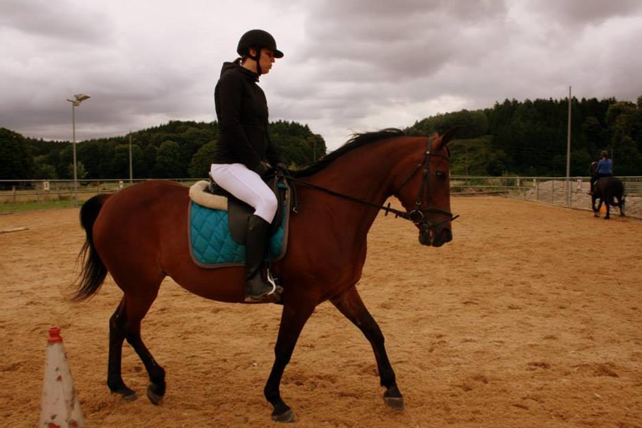 vertikal-kritik_oliveira-stables_traber-vertikal