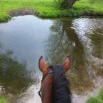 fliegenspray_pferde
