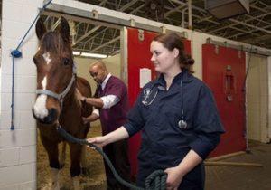 Herpes bei Pferden – Epidemie vor der Stalltür – was tun