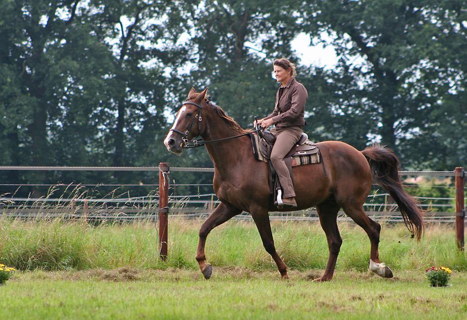 Serie: Entspannter Umgang mit dem Pferd – Tipps von Ellen Vierhaus