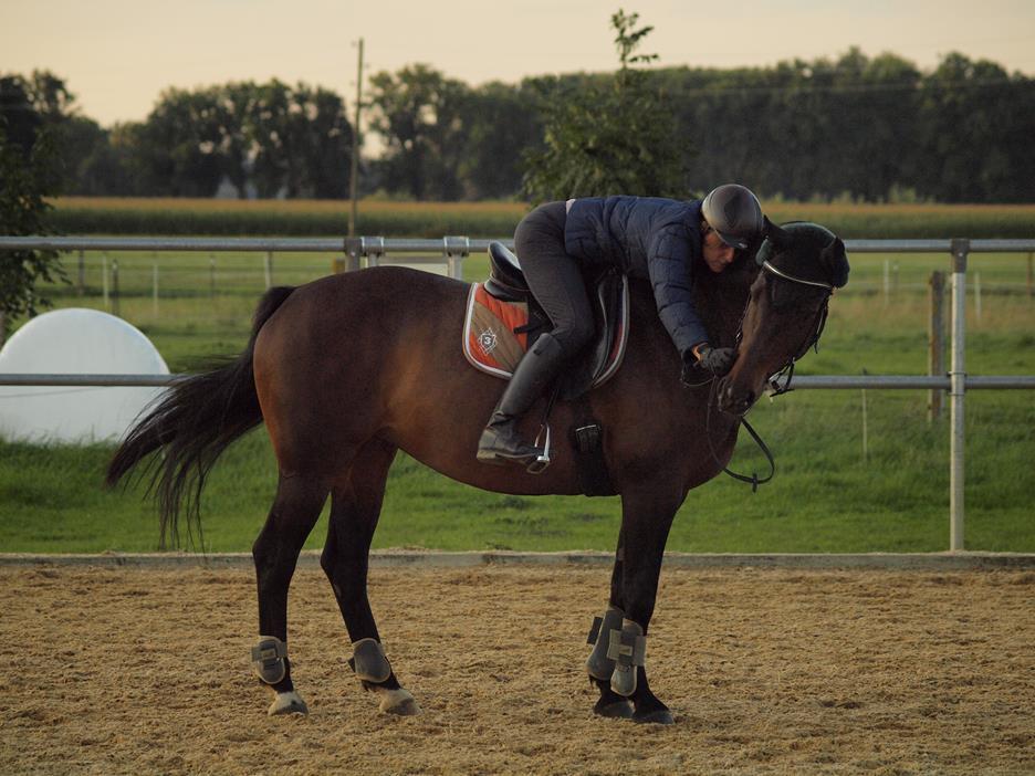 Besser sitzen – Tipps von renommierten Pferdebloggern für Traberreiter