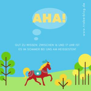 Hitzefrei für Traber: Tipps für Pferd & Co.
