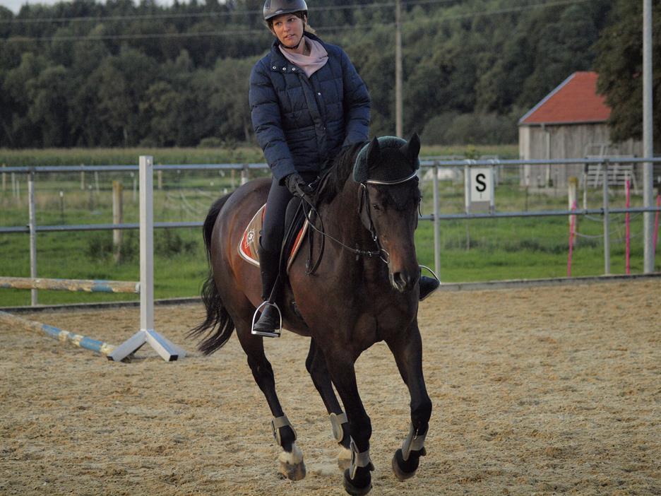 Traber Galopp Pferdeausbildung Traberblog