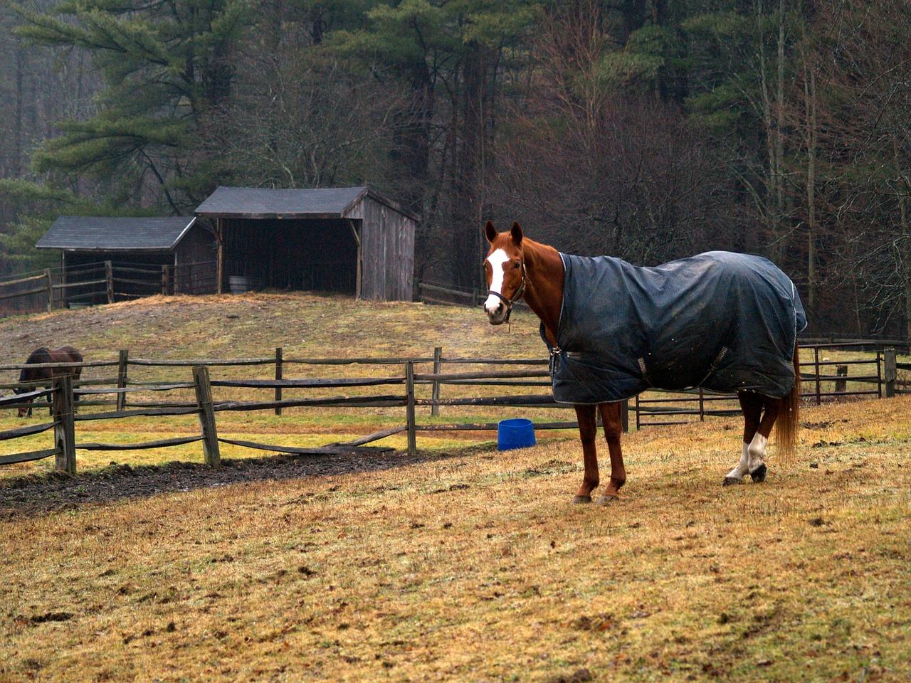 Wann Pferde eindecken – Leitfaden Pferdedecken
