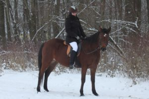 Read more about the article Aufstollen, Eisglätte & Co. – Pferde bewegen im Winter