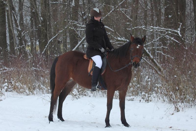 Aufstollen, Eisglätte & Co. – Pferde bewegen im Winter