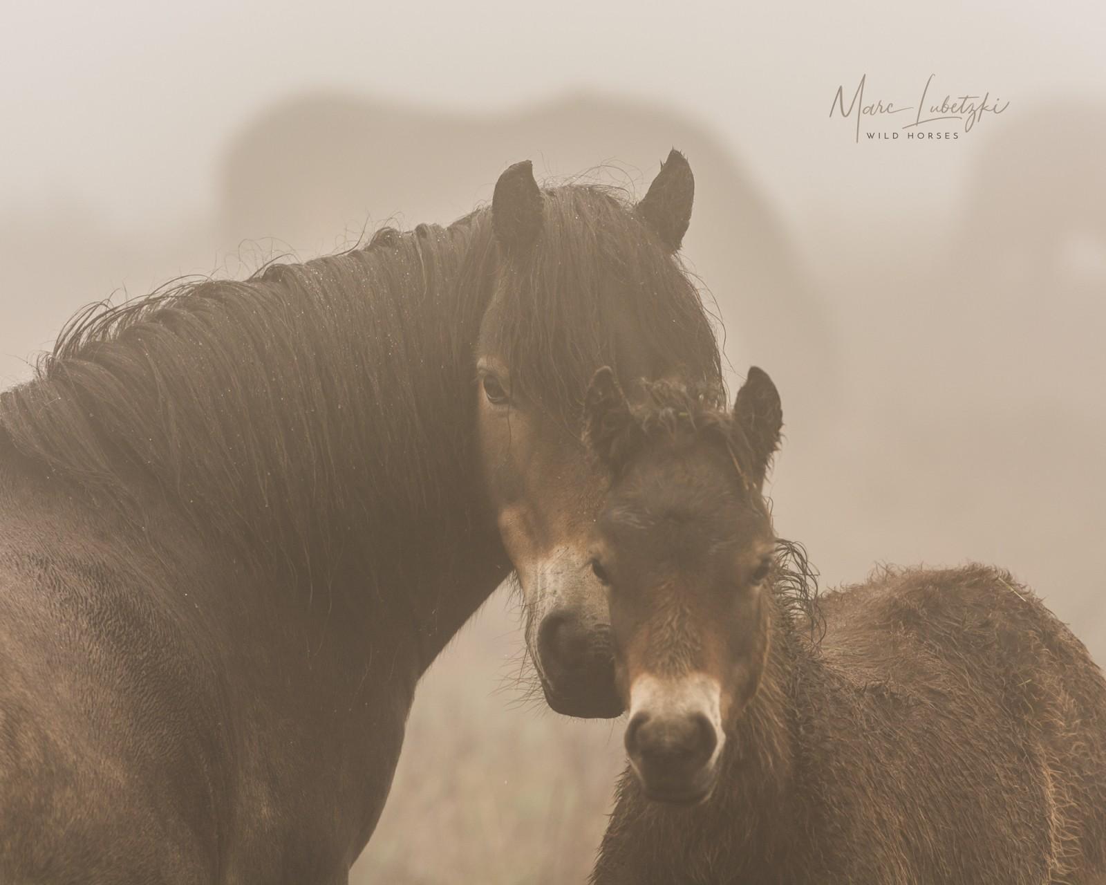 Was wir von Wildpferden lernen können – Interview mit Tierfilmer Marc Lubetzki