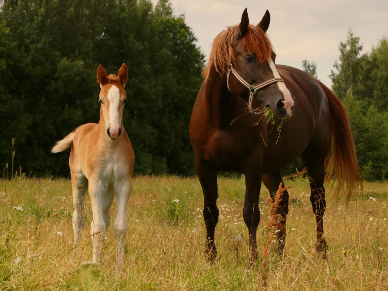 Read more about the article Corona & Spätfolgen: Ute kämpft in Estland um die letzten Zarenpferde