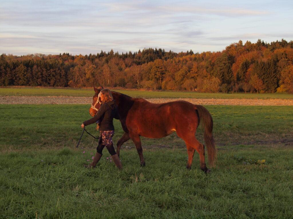fit-reiter-fitte-pferde_fit-aufs-pferd_traber-reiten